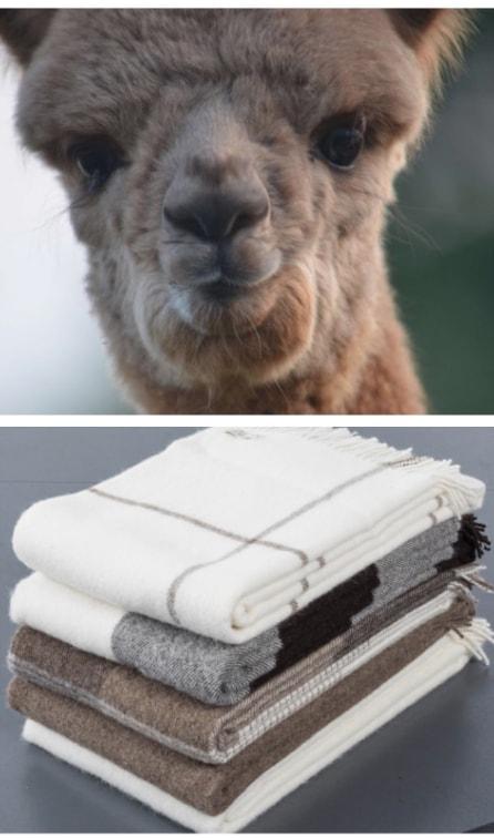 finden sie das richtige weinachtsgeschenk abolengo de alpaca. Black Bedroom Furniture Sets. Home Design Ideas