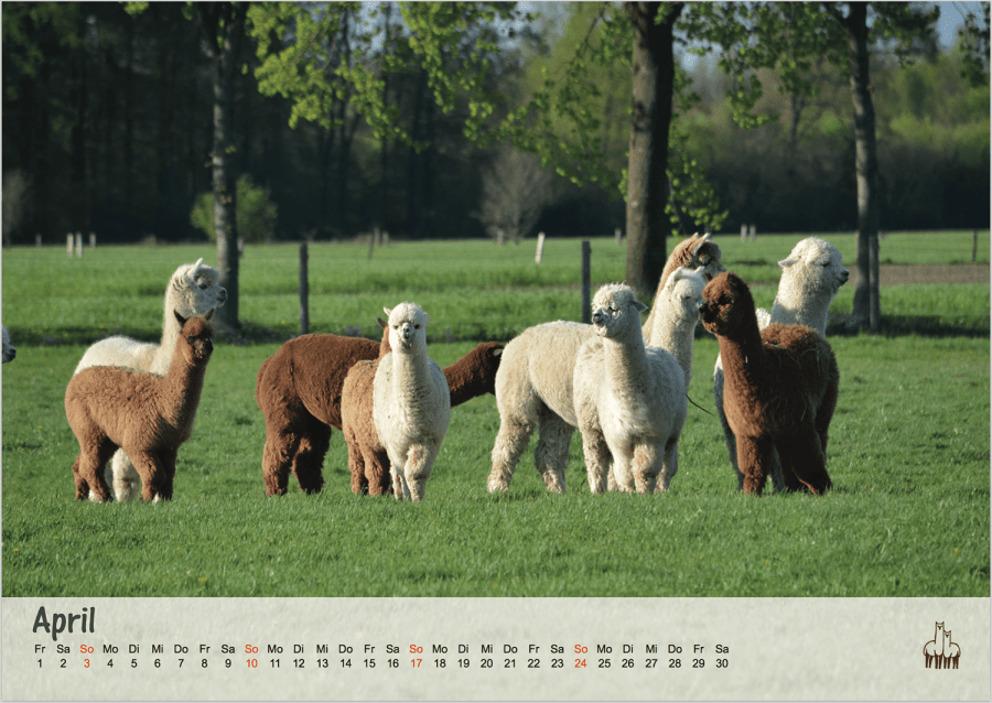 alpaka kalender 2016 abolengo de alpaca. Black Bedroom Furniture Sets. Home Design Ideas