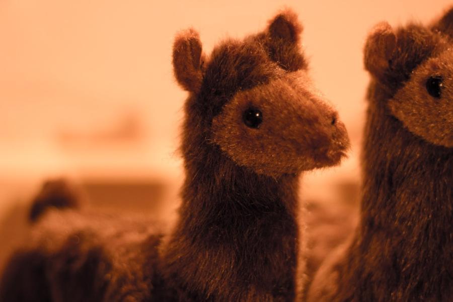 Traumhaftsch nes alpaka stofftier abolengo de alpaca - Alpaka kuscheltier ...